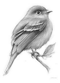 pictures different bird sketches drawing drawing art gallery