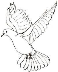 drawn crow dove pencil and in color drawn crow dove