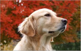 Doge Meme Wallpaper - best of 18 doge wallpapers download free picsbroker com