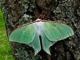 what s the difference between moths and butterflies howstuffworks