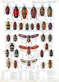 true bugs asu ask a biologist