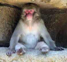 monkey island the cincinnati zoo u0026 botanical garden