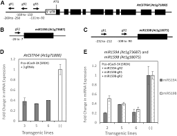 a crispr cas9 toolbox for multiplexed plant genome editing and
