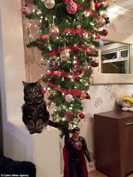 cardiff family hang christmas tree from the ceiling to stop cat