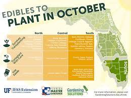 Texas Vegetable Garden Calendar by Surprising Ideas Florida Vegetable Gardening Plain Decoration