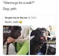 Come And Get It Meme - he still a cute pupper meme xyz