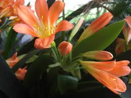 tiger lillies tiger lillies by mattiemoonflower on deviantart