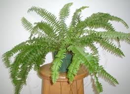 Kućne biljke-čistaći životne oaze Images?q=tbn:ANd9GcRPrGUQSMXqj15UMiIyjz6zoKgE1az93UK2-nwGcuD8RqJdxbU&t=1&usg=__M4Cy2YzyvWkBlWmDxFGAJfNXlWM=