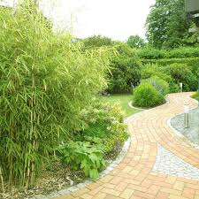 bambus im garten u2013 motelindio info