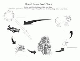 food chain pyramid best picture food chain coloring page at best