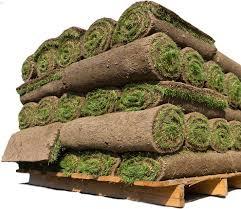 Extreme Aprenda como cultivar um gramado verde e fechado &DD15