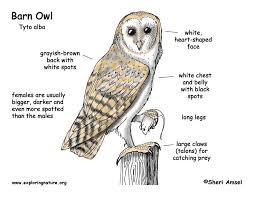 The Owl Barn Gift Collection Barn Owl Diagram Outdoor Science Activities For In The