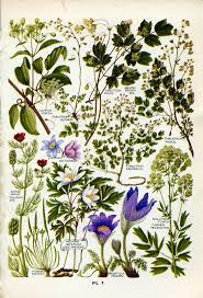 288 best plants images on pinterest botanical prints botanical