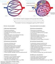 angiogenesis the basic science of oncology 5e accesshemonc