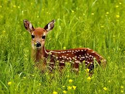 the meaning of the dream in which you saw deer