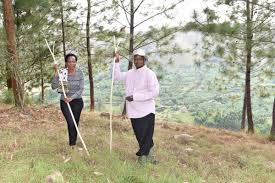 museveni orders eucalyptus trees and fish ponds in wetlands must