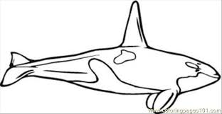 N Whale Coloring Pages 10 Med Coloring Page Free Whale Coloring Whale Color Page