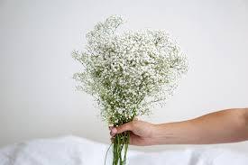 fleurs blanches mariage fleur blanche mariage nom map titecagne