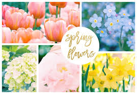 Best Spring Flowers - 42 spring flowers inspired by pantone colors of the year