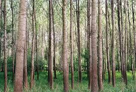 free photo woods tree tree forest free image on pixabay