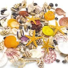 amazon com sea shells mixed beach seashells natural colorful sea