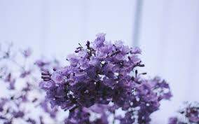 photography pretty flowers purple nature floral brisbane artists