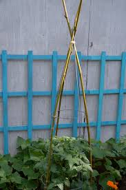 bamboo tomato cages u2014 ms buena vida
