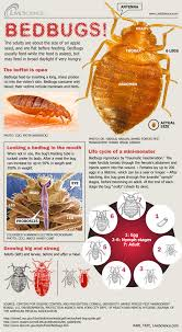Living With Bed Bugs Bedbugs Facts Bites And Infestation