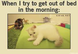 Get Out Of Bed Meme - rolling out of bed babybumps