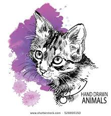 cat drawing stock images royalty free images u0026 vectors shutterstock