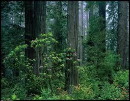 Grade7geography natural vegetation