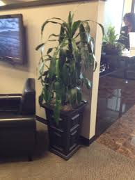 Office Plants by Office Plants And Greenery By Cj In Pleasanton