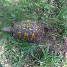how my pet helps me see the wilderness in my cape cod backyard