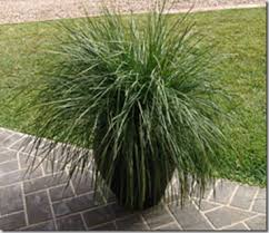 Patio Plants For Sun Gardendesigns More Want A Stunning Groundcover It U0027s A Breeze