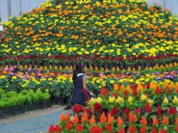 What Is Curtain Raiser Curtain Raiser For Flower Show Competition Times Of India