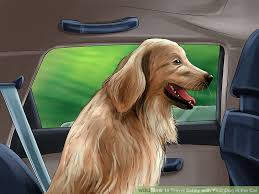 Rhode Island how to travel with a dog images 3 ways to travel safely with your dog in the car wikihow jpg