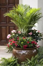 Outdoor Container Gardening Ideas Backyard Potted Plant Ideas Best Outdoor Potted Plants Ideas On