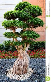 bonsai tree stock photo image 48717137