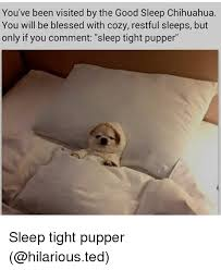 Funny Chihuahua Memes - 25 best memes about good sleep chihuahua good sleep chihuahua