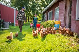 common myths about raising backyard poultry lubbock online