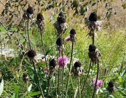 garden prep for winter when to cut back perennials