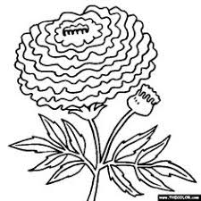 large sunflower coloring picture free printable preschool level