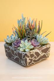 How To Make A Succulent Planter Tips For Planting Succulents In Containers Succulents And Sunshine