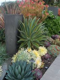 Modern Front Yard Desert Landscaping With Palm Tree And 596 Best Desert Landscaping Images On Pinterest Landscaping