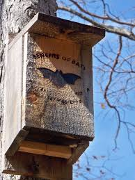 bat house plans u2013 tips for building a bat house and attracting