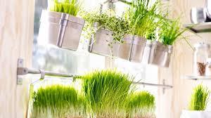 plante pour cuisine plante pour cuisine neon pour cuisine tuyau cuivre cuisine