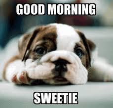 Goodmorning Meme - good morning sweetie meme xyz
