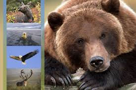 Alaska wildlife images Alaska stock images gallery of alaska wildlife jpg