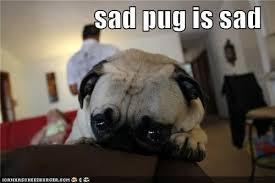 Sad Pug Meme - it never gets easier you just get stronger klkincaid replied to