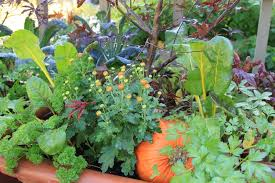 gorgeous companion flowers for vegetable gardens 17 best ideas